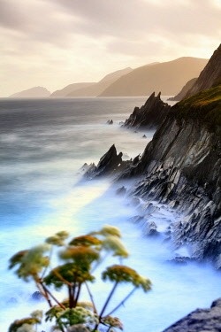 Europe, Ireland, Kerry, Slea Head sea stacks along Dingle peninsula