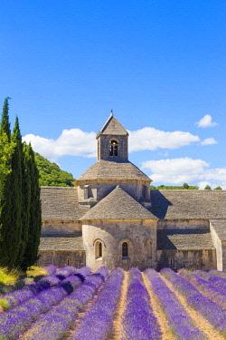 FRA10179AWRF Provence, France. Lavender field at Senanque Abbaye
