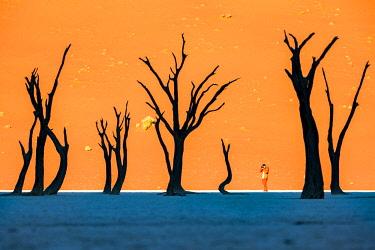 NAM6441AW Africa, Namibia, Deadvlei, Namib desert, dead acacia trees