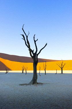 NAM6445AW Dead Vlei, Sossusvlei, Namib desert at sunrise, Namibia, Africa.
