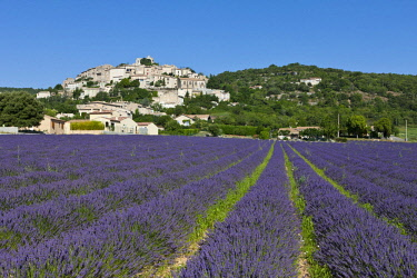 HMS2066277 France, Alpes de Haute Provence, Simiane la Rotonde, lavender field