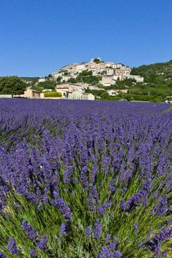 HMS2066278 France, Alpes de Haute Provence, Simiane la Rotonde, lavender field