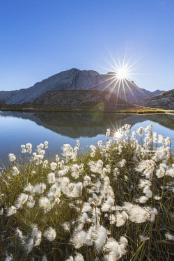 HMS2429314 France, Hautes Alpes, Parc Naturel Regional du Queyras (Natural regional park of Queyras), balls white of the Scheuchzer's cottongrass (Eriophorum scheuchzeri) on the lake of Eychassier (2770m) in the...