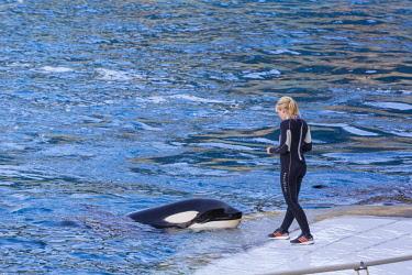 HMS2480279 France, Alpes Maritimes, Antibes, Marineland, marine park, killer whales show