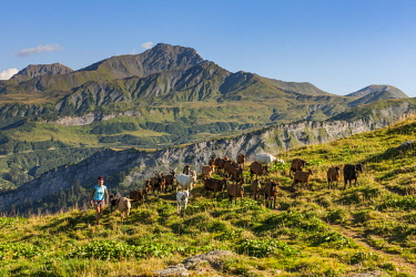 HMS2881276 France, Savoie, Caroline Joguet and her flock of goats in the alpine pastures