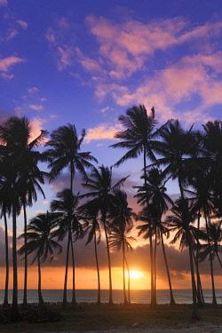 TZ02338 Tanzania. Zanzibar, Jambiani, Jambani Beach and Coconut Plantation