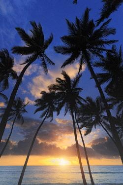 TZ02339 Tanzania. Zanzibar, Jambiani, Jambani Beach and Coconut Plantation