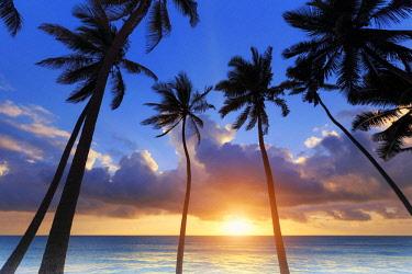 TZ02341 Tanzania. Zanzibar, Jambiani, Jambani Beach and Coconut Plantation
