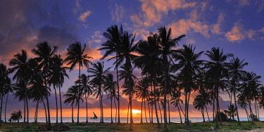 TZ02337 Tanzania. Zanzibar, Jambiani, Jambani Beach and Coconut Plantation