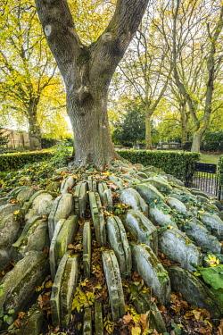 UK11218 The Hardy Tree, St. Pancras Old Church, Kings Cross, London, England, UK