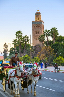 MOR2376AW Morocco, Marrakech-Safi (Marrakesh-Tensift-El Haouz) region, Marrakesh. Calèche horse-drawn carriage passes in front of Koutoubia Mosque.