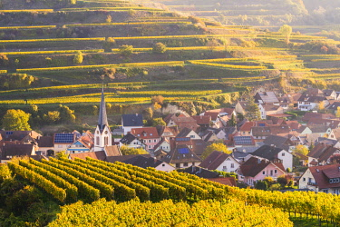 GER10521AWRF Bickensohl, Vogtsburg im Kaiserstuhl, Kaiserstuhl region, Black Forest (Schwarzwald), Breisgau-Hochschwarzwald, Baden-Württemberg, Germany. Vineyards at sunrise.