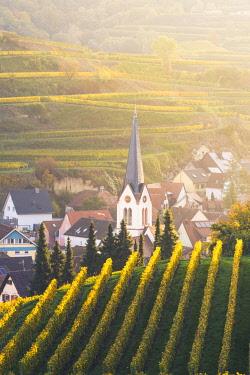 GER10467AW Bickensohl, Vogtsburg im Kaiserstuhl, Kaiserstuhl region, Black Forest (Schwarzwald), Breisgau-Hochschwarzwald, Baden-Württemberg, Germany. Vineyards at sunrise.