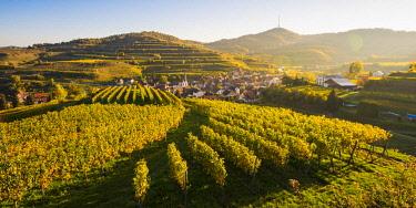GER10469AW Bickensohl, Vogtsburg im Kaiserstuhl, Kaiserstuhl region, Black Forest (Schwarzwald), Breisgau-Hochschwarzwald, Baden-Württemberg, Germany. Vineyards at sunrise.