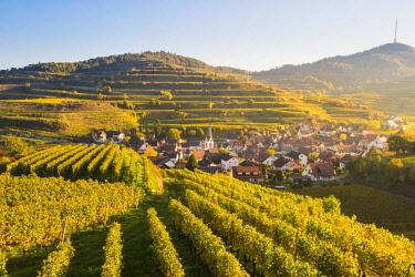 GER10470AW Bickensohl, Vogtsburg im Kaiserstuhl, Kaiserstuhl region, Black Forest (Schwarzwald), Breisgau-Hochschwarzwald, Baden-Württemberg, Germany. Vineyards at sunrise.