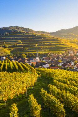 GER10471AW Bickensohl, Vogtsburg im Kaiserstuhl, Kaiserstuhl region, Black Forest (Schwarzwald), Breisgau-Hochschwarzwald, Baden-Württemberg, Germany. Vineyards at sunrise.