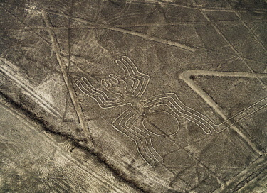 PER34037AW The Spider Geoglyph, aerial view, Nazca, Ica Region, Peru