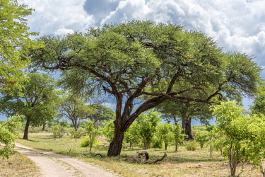 ZIM2589AW Africa, Zimbabwe, track through the bush in Hwange National Park.