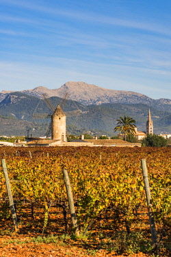 SPA7357AW Vineyards in Binissalem, Majorca, Balearic Islands, Spain