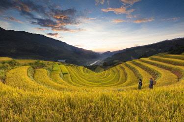VIT1434AW Two women walk though fields of rice terraces at sunset, Mu Cang Chai Yen Bai Province, Vietnam, South-East Asia