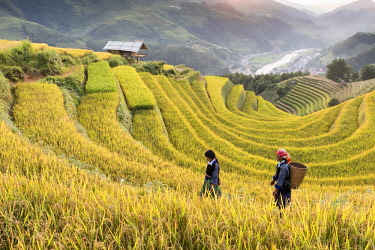 VIT1463AW Two women walk though fields of rice terraces at sunset, Mu Cang Chai, Yen Bai Province, Vietnam, South-East Asia