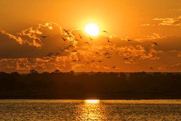ZIM2708AW Africa, Zimbabwe, Matabeleland north. Sunset over the Zambezi near to Victoria Falls