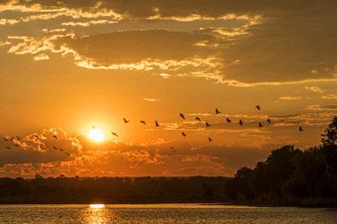 ZIM2709AW Africa, Zimbabwe, Matabeleland north. Sunset over the Zambezi river near to Victoria Falls