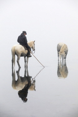FRA10187AW A guardian and his horse stand in calm water next to a white horse, Camargue, Provence-Alpes-Cote d'Azur, France
