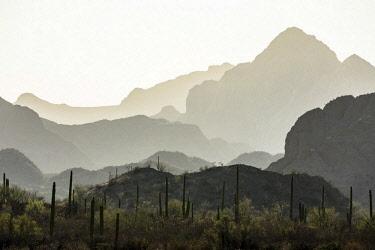ARPEAN000711 Beautiful natural scenery with Sierra de la Giganta mountains and cacti, Loreto, Baja California Sur, Mexico