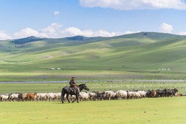 CLKFV74287 Shepherd on horseback gathering sheeps and goats. Ovorkhangai province, Mongolia.