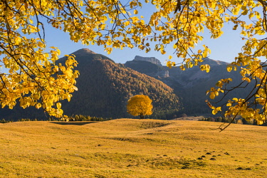 CLKGM73120 Yellow trees and meadows atMonte Bondone in autumn. Trento, Trentino, Italy