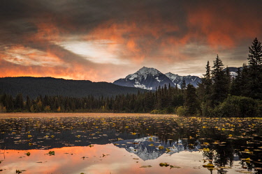 CLKMG71888 Kenai peninsula, Alaska, United States of America