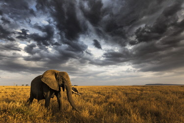 CLKMG71906 Seronera, Serengeti National Park, Tanzania, East Africa