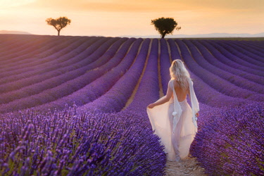 CLKSC73886 Blonde girl in a white dress in a lavender field at sunset, valensole, provence, france
