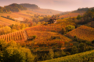 ITA11424AW Langhe, Piedmont, Italy. Autumn landscape with vineyards and hills.