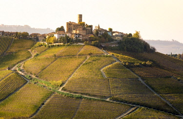 ITA11425AW Serralunga d'Alba, Langhe, Piedmont, Italy. Autumn landscape with vineyards and hills.