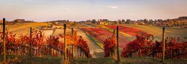 ITA11433AW Lambrusco Grasparossa Vineyards in autumn. Castelvetro di Modena, Emilia Romagna, Italy