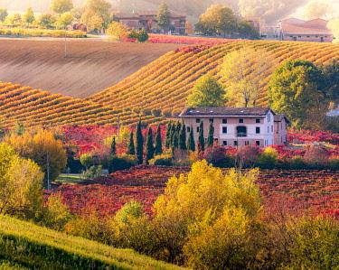 ITA11437AW Lambrusco Grasparossa Vineyards in autumn. Castelvetro di Modena, Emilia Romagna, Italy