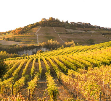 ITA11439AW Langhe, Piedmont, Italy. Autumn landscape with vineyards and hills.