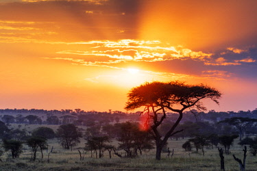 TZ3474 East Africa, Tanzania, safari in the Serengeti National Park, Unesco World Heritage site, sunset