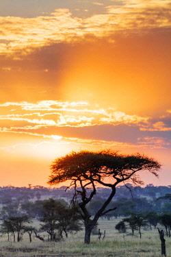 TZ3475 East Africa, Tanzania, safari in the Serengeti National Park, Unesco World Heritage site, sunset