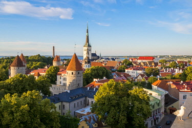 HMS2869326 Estonia (Baltic States), Harju region, Tallinn, historical center listed as World Heritage by UNESCO, Patkuli Belvedere on Toompea Hill, overlooking the bell tower of the Church of St. Olaf (Oleviste...
