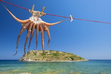 HMS3111357 Greece, Eastern Crete, Lassithi district, Mirabello bay, Mochlos fishing village and Mochlos island, drying octopus
