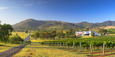 AUS2975AW Ben Ean Wine Estate, Hunter Valley, New South Wales, Australia