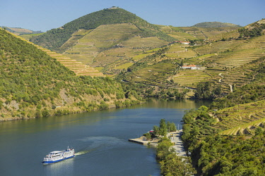 HMS2825294 Portugal, Upper Douro Valley and its vineyards listed as UNESCO World Heritage, surroundings of Pinhao, cruise on the Douro river