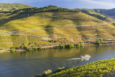HMS2825310 Portugal, Upper Douro Valley and its vineyards listed as UNESCO World Heritage, surroundings of Pinhao, cruise on the Douro river