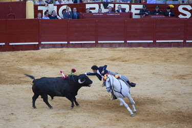 HMS2519165 Spain, Andalusia, Jerez de la Frontera, Jerez Bullring, horseback bullfight, May 2016