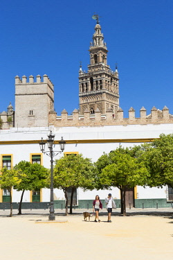 HMS2653382 Spain, Andalucia, Sevilla, Santa Cruz district, the Giralda tower, former minaret of the Almohade great mosque listed as World Heritage by UNESCO from the Patio de las Banderas