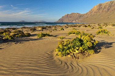 HMS2214838 Spain, Canaries Islands, Lanzarote island, beach of Famara