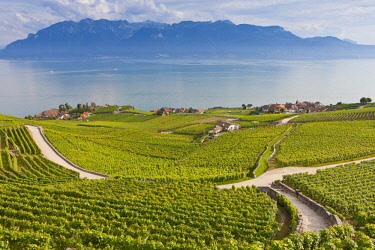 HMS2005144 Switzerland, Canton of Vaud, Lavaux Vineyard Terraces listed as World Heritage by UNESCO, it extends from Montreux to Lausanne on 32km along Lake Geneva and 850ha village of Rivaz